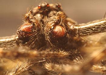 Makro Spinnenkopf